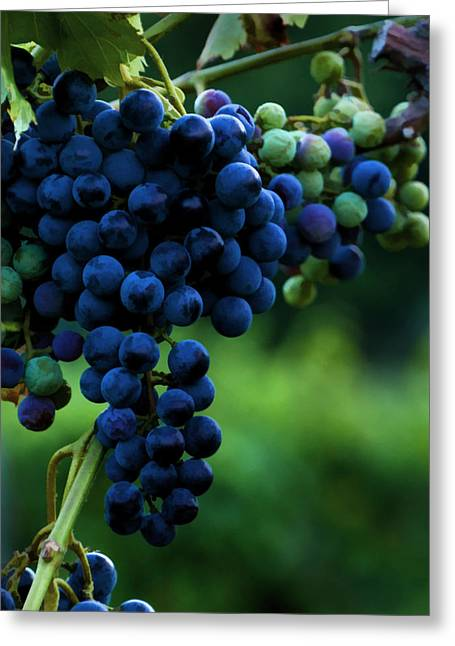 Wine On A Vine Greeting Card by Ann Bridges