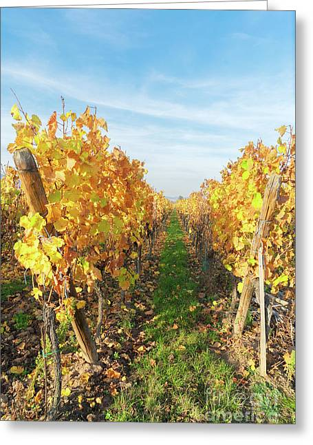 Wine Route, Alsace Greeting Card by Anastasy Yarmolovich