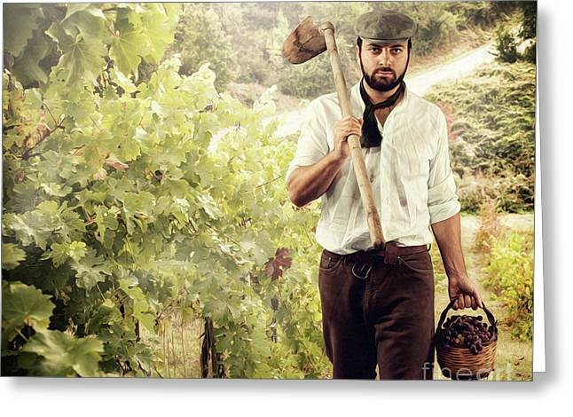 Winegrower While Harvest Grapes Greeting Card