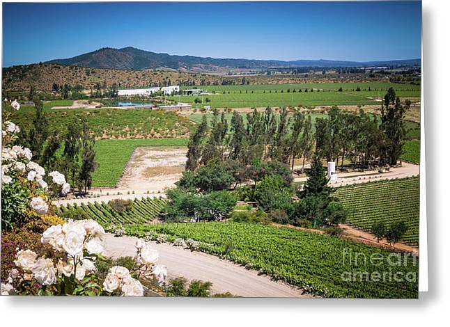 Vineyard View With Roses, Winery In Casablanca, Chile Greeting Card