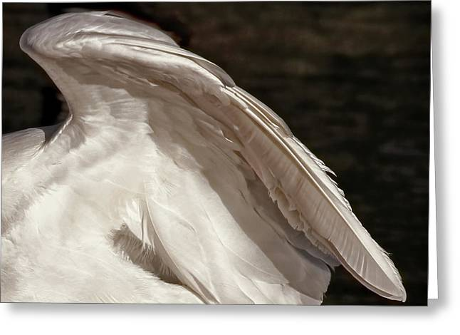 Greeting Card featuring the photograph Wing Of An Egret by Jennie Marie Schell