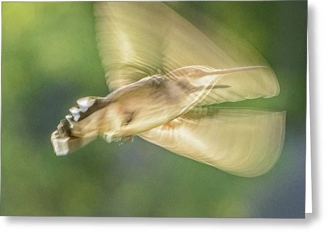 Wing Shadow Greeting Card
