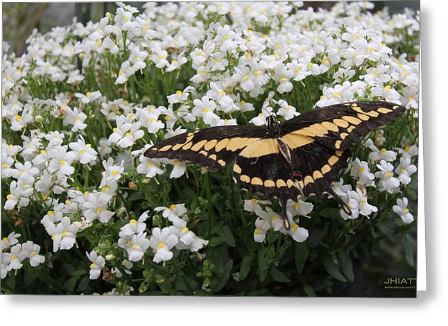 Wing Span Greeting Card