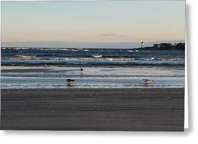 Wingaersheek Beach Seagulls At Sunrise Greeting Card