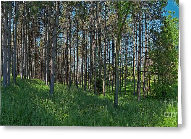 Wingate Prairie Veteran Acres Park Pines Crystal Lake Il Greeting Card