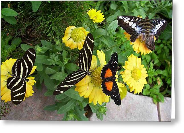 Winged Beauties Greeting Card by Sandy Collier