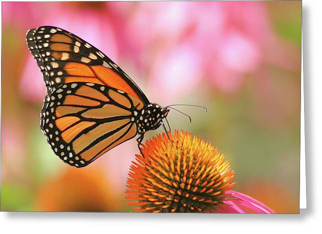 Greeting Card featuring the photograph Winged Beauty by Doris Potter