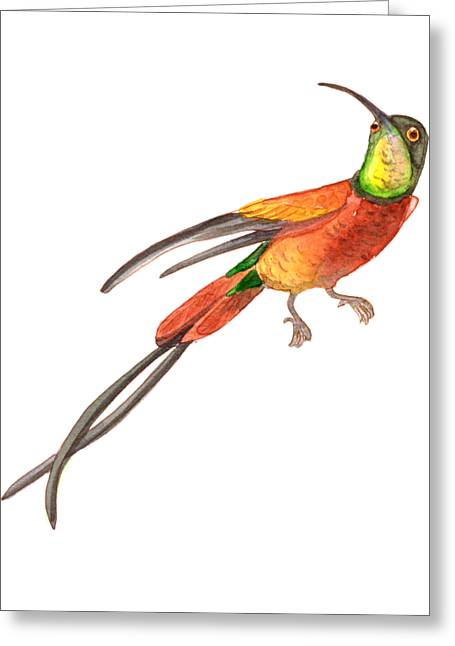 Greeting Card featuring the painting Winged Jewel 6, Watercolor Tropical Rainforest Hummingbird Red, Yellow, Orange And Green by Audrey Jeanne Roberts