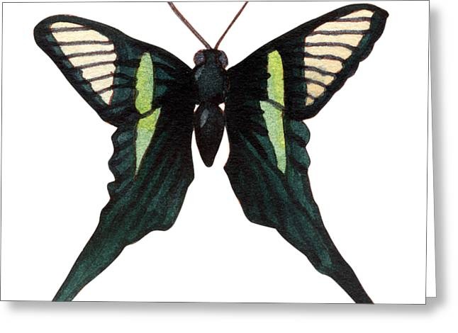 Winged Jewels 3, Watercolor Tropical Butterfly With Curled Wing Tips Greeting Card