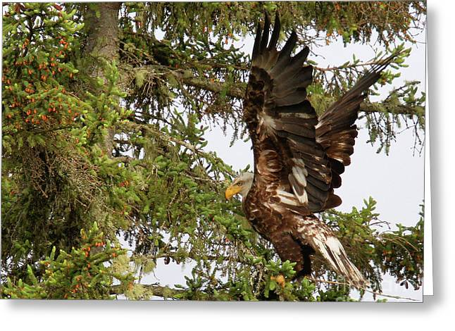 Greeting Card featuring the photograph Winging-it Up The Tree 1 by Debbie Stahre