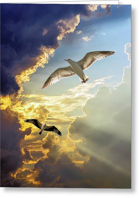 Wings Against The Storm Greeting Card by Brian Wallace