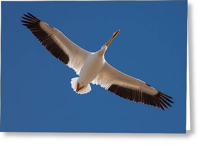 Greeting Card featuring the photograph Wings Are Spread by Monte Stevens