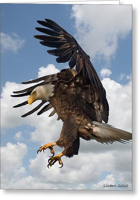 Wings Beak And Talons Greeting Card