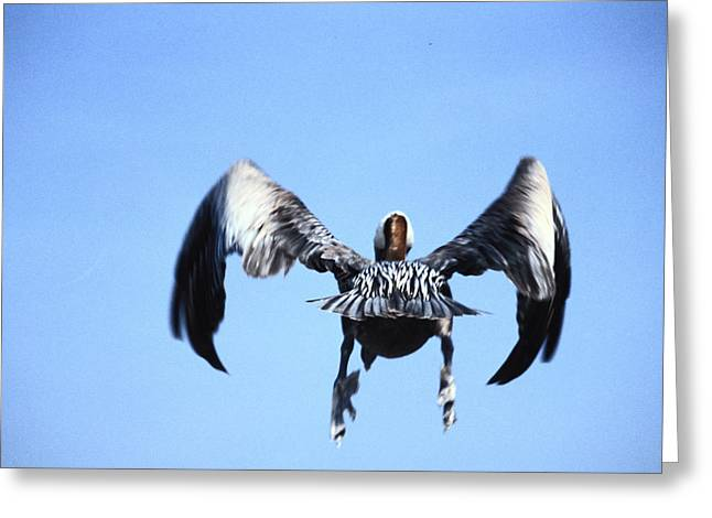 Wings In Position And Flaps Down Greeting Card by Carl Purcell