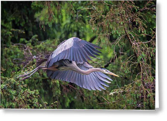 Wings In The Forest Greeting Card by Loree Johnson