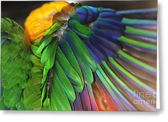 Wings Of A Conure Greeting Card by Andrea Lazar