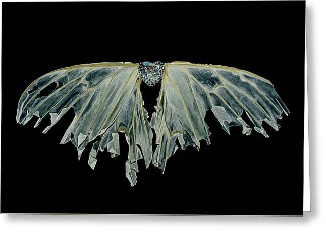 Wings Of Love Greeting Card by Jessica Lee Nelson