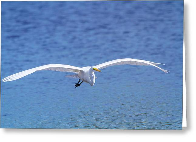 Wings Of The Great White Greeting Card by Mark Andrew Thomas