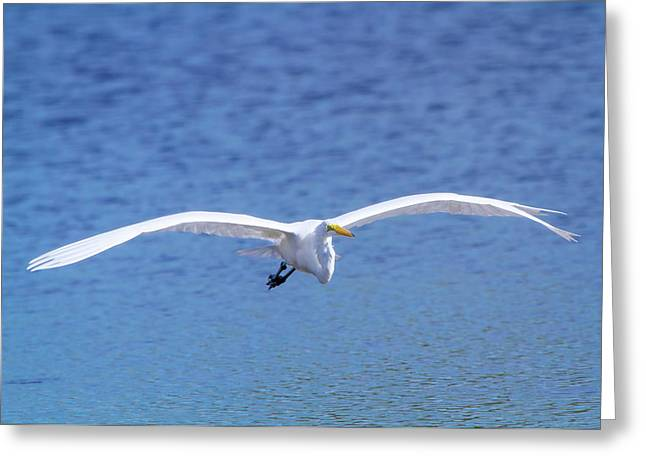 Wings Of The Great White Greeting Card