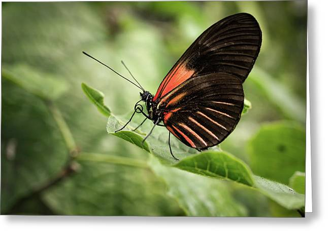 Wings Of The Tropics Butterfly Greeting Card