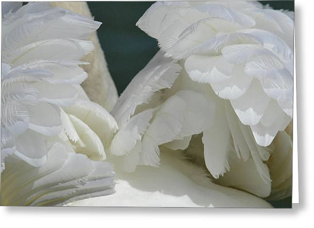 Wings Of White Greeting Card