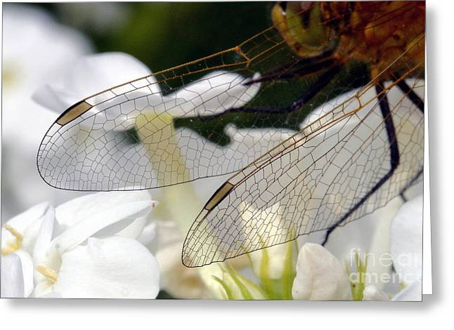 Wings On A Dragon Greeting Card by Steve Augustin