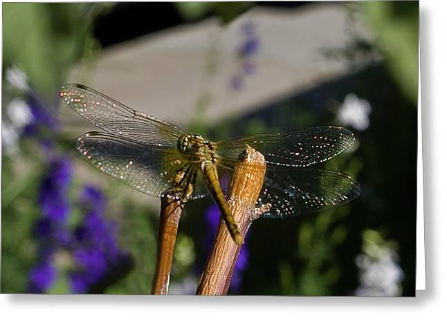 Wings Sparkling In The Sun Greeting Card by ShaddowCat Arts - Sherry