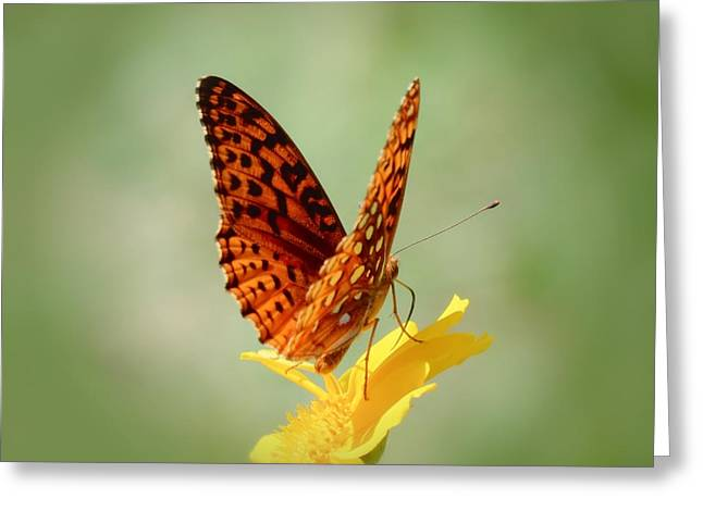 Wings Up - Butterfly Greeting Card