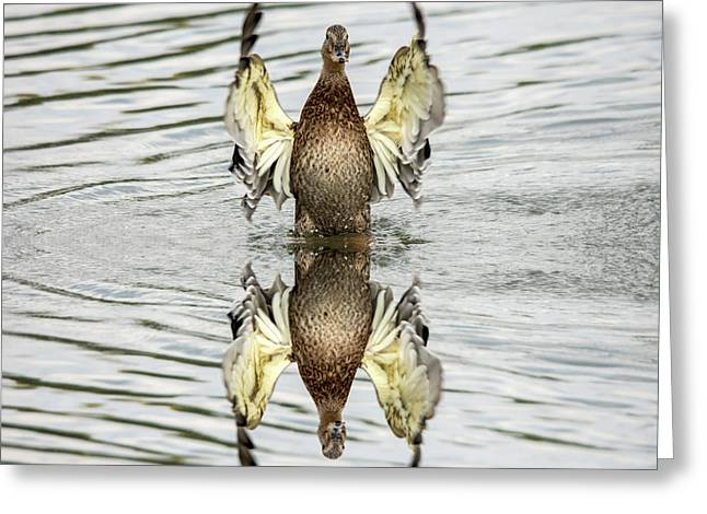 Wings Up Reflection  Greeting Card