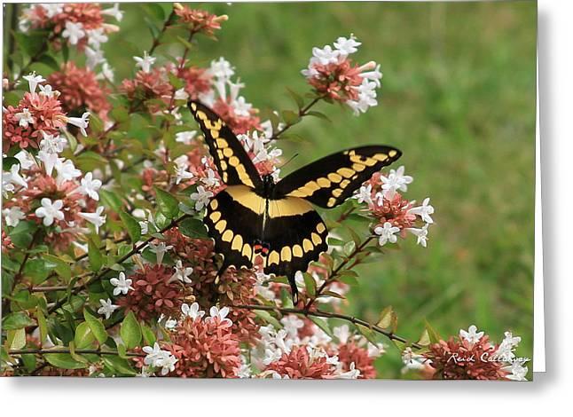 Wingspan Giant Swallowtail Greeting Card by Reid Callaway