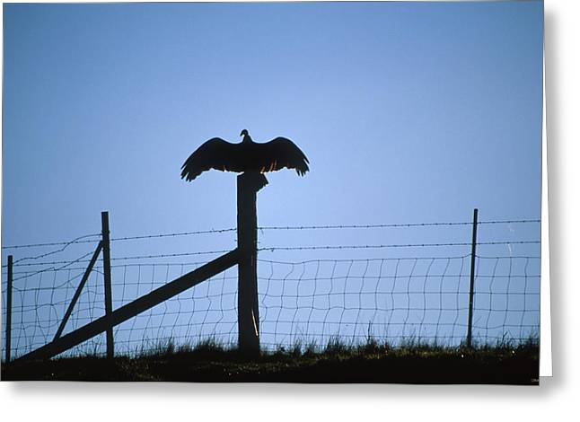 Wingspan Greeting Card by Soli Deo Gloria Wilderness And Wildlife Photography