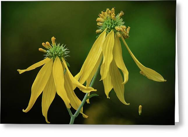 Wingstem - Wildflower Greeting Card by Nikolyn McDonald