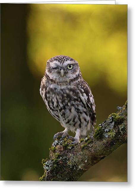 Winking Little Owl Greeting Card