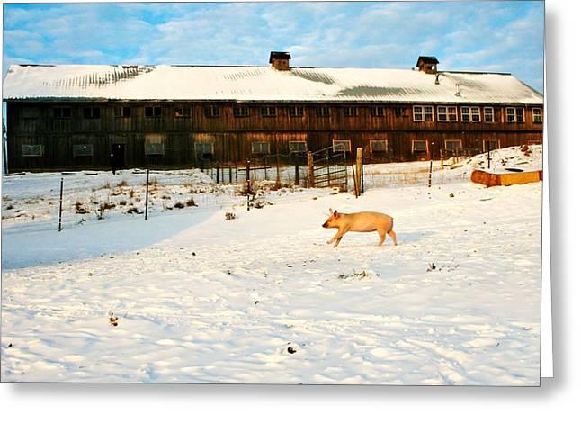 Winnie At Heartland Farm Sanctuary Greeting Card