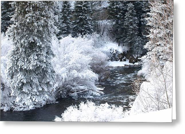 Winter Along The Creek Greeting Card