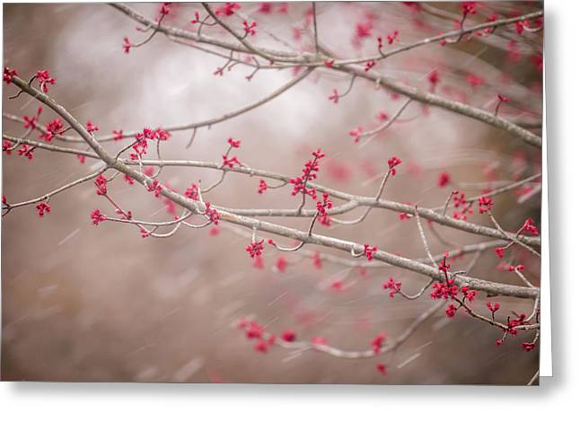 Greeting Card featuring the photograph Winter And Spring by Terry DeLuco