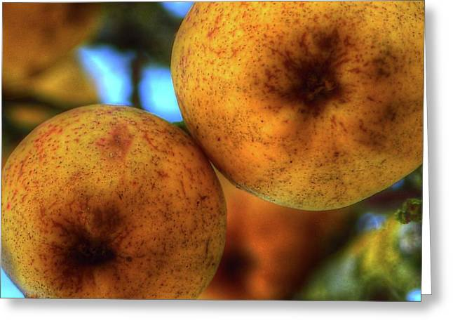 Winter Apples 2 Greeting Card