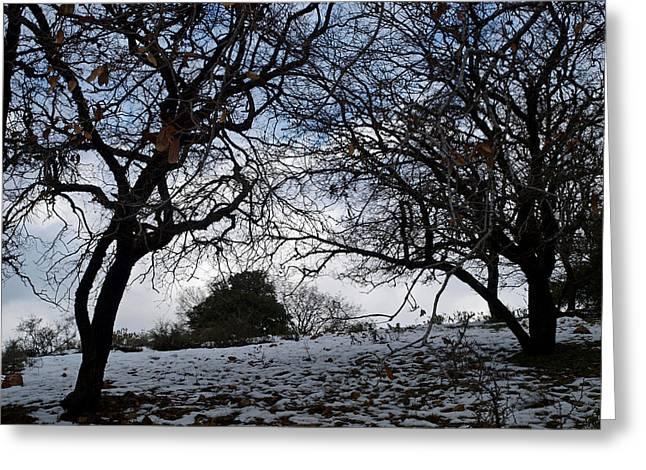 Winter Greeting Card by Arik Baltinester