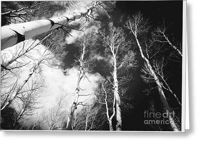 Greeting Card featuring the photograph Winter Aspens by The Forests Edge Photography - Diane Sandoval