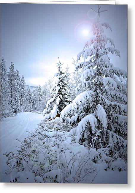 Winter At Carmi Mountain Greeting Card by Tara Turner