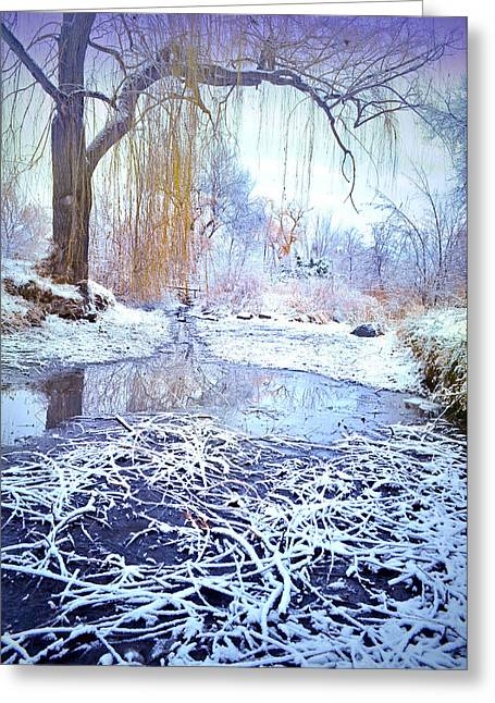 Winter At Skaha Lake Park Greeting Card by Tara Turner