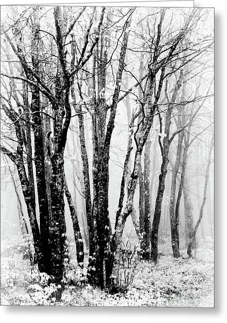 Winter Bare Trees In A Spring Fog Bw Greeting Card