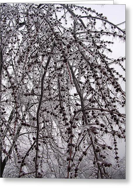 Winter Beauty Greeting Card by Audrey Venute