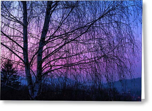 Winter Birch Tree Greeting Card by Jenny Rainbow