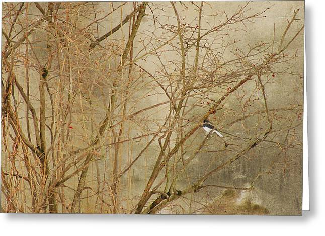 Winter Bird At The Audubon Greeting Card