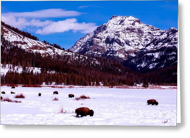 Winter Bison In Yellowstone Greeting Card by L O C