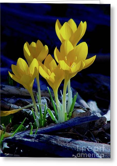 Winter Bloom Greeting Card by Sean Griffin