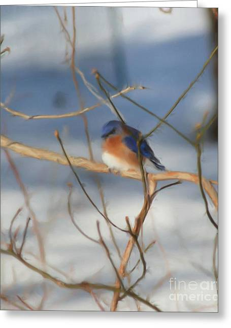 Winter Bluebird Art Greeting Card