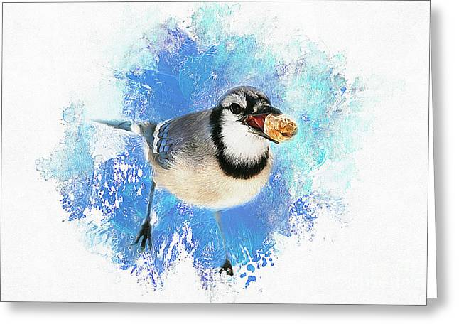 Greeting Card featuring the photograph Winter Bluejay by Darren Fisher