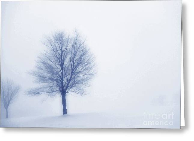 Winter Blues Greeting Card by Randy Steele